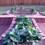 Garden - 3